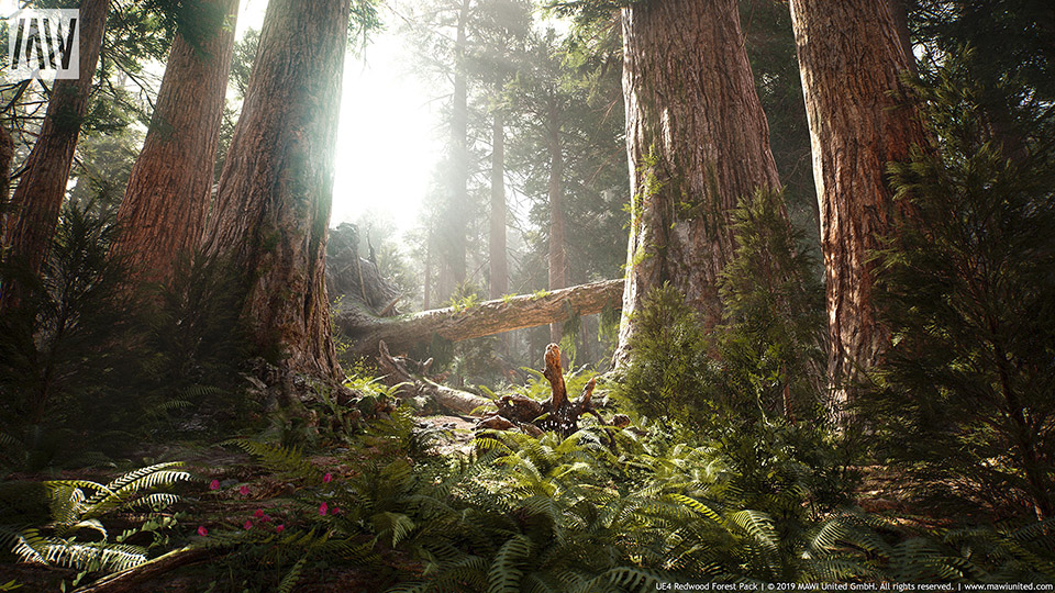 Agancg_UE4_Redwood-Forest-Collection01